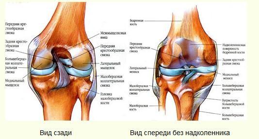 что делать если у тебя артроз коленного сустава
